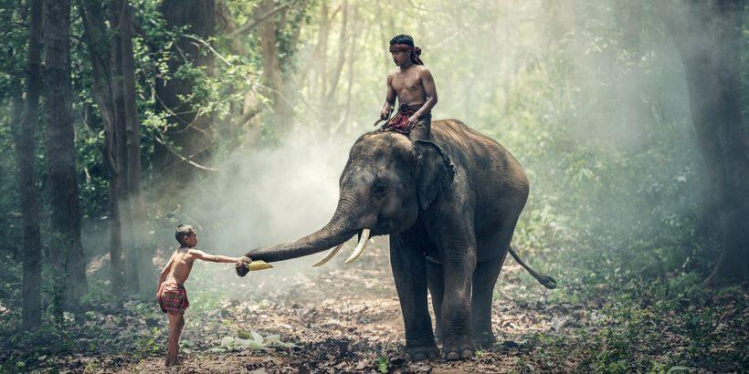 elephant_india