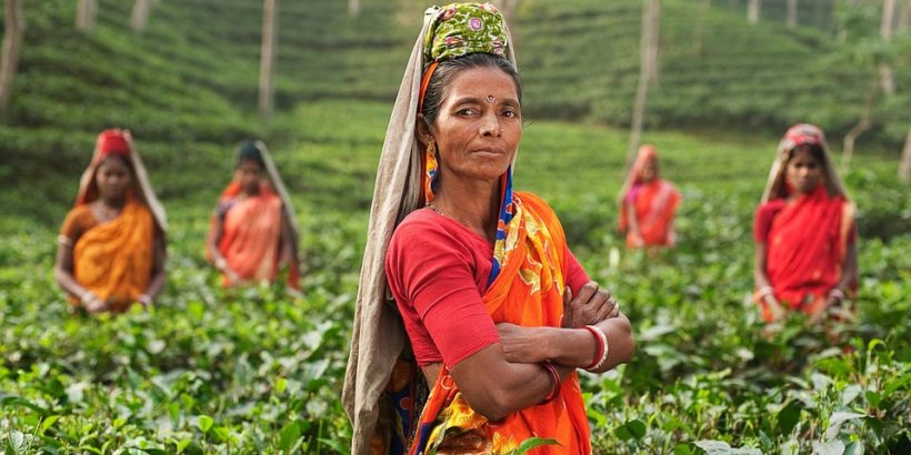 Чайная плантация в Индии