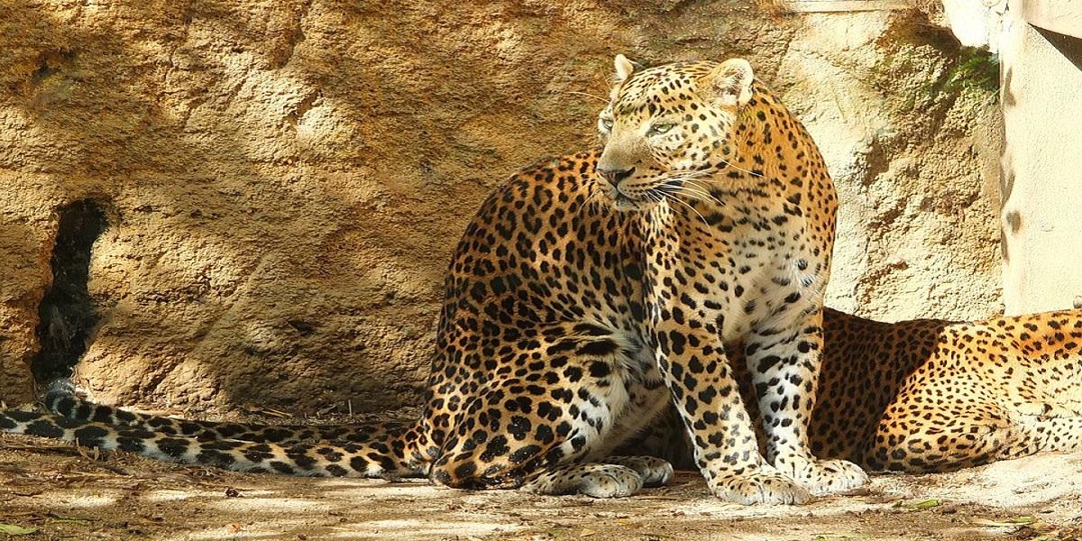 Парк Сафари на Шри-Ланке