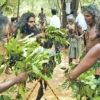 vedi_srilanka