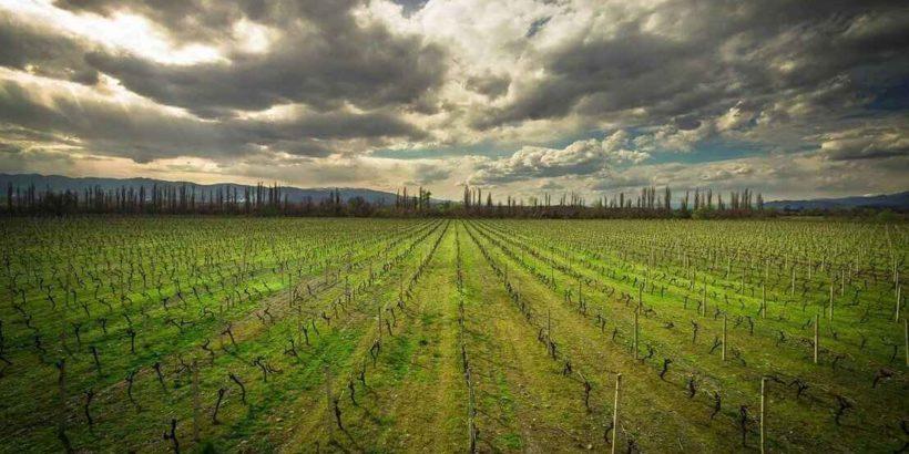 vinogradnik_georgia